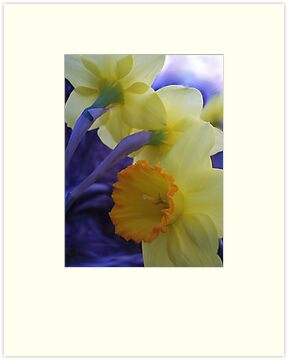 Daffys by NatureGreeting Cards ©ccwri