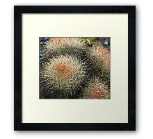 Spiky Framed Print