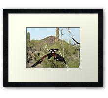 """""""oops"""" Harris Hawk  Framed Print"""