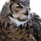 Great Horned Owl by Sherry Pundt