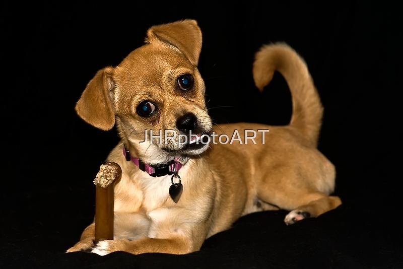 This Bone Is Mine by JHRphotoART