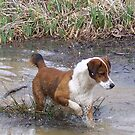 Buddy On A Frog Hunt by NatureGreeting Cards ccwri