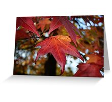 Changing Leaves of Autumn Greeting Card