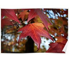 Changing Leaves of Autumn Poster