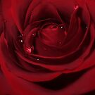 Love Hurts! - Rose by naturelover