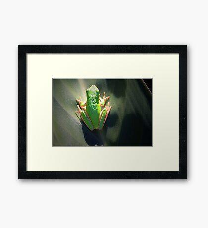 Healthy Environment Framed Print