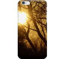 Golden Sunset in the Trees iPhone Case/Skin