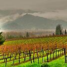 vista di vino by Bruce  Dickson