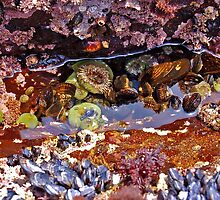 Tidal Pool Wonder by Terry Watts