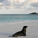 Sea Lion Sunset  by Jane McDougall