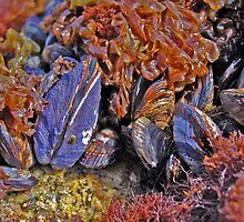 Mussels by Terry Watts