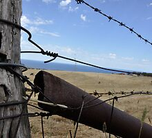 barbed wire by Katrina Goh