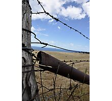 barbed wire Photographic Print