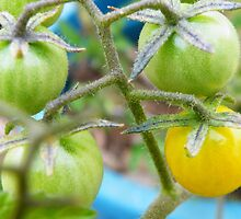 Yellow Tomato by PhoenixArt