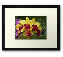 Flowers and Butterflies Framed Print