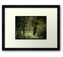 Colors of Winter Framed Print
