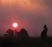 Wallaby sunset at Bucca NSW by Sue Wetherell
