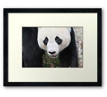 Wang Wang  Framed Print