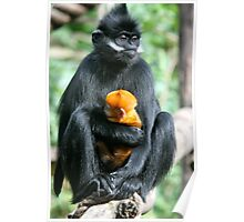 Francios Langur and Baby. Poster