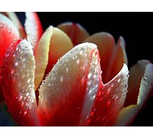 Tulips for you. Photographic Print