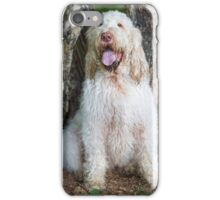 Orange & White Italian Spinone Dog iPhone Case/Skin