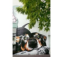 Graffiti Dog! Photographic Print