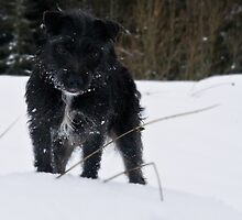 Bailey - The Patterdale by Chris Clark