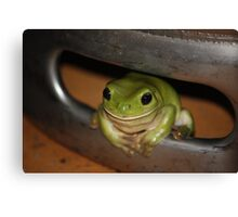 Green Frog in Beer Barrel Canvas Print