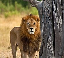 The king by Konstantinos Arvanitopoulos
