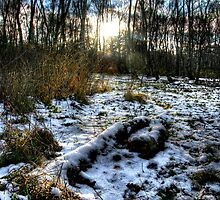 """See The Sun Dance On Winter's Woodland Floor"" by Bradley Shawn  Rabon"