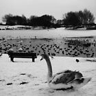 Bench & Swan by Mjay