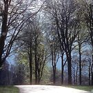 Early spring in Wiltshire by nealbarnett