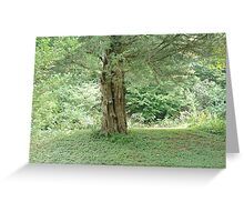 Eastern Red Cedar Tree Greeting Card