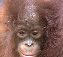 The Orangutans of Tanjung Puting, Indonesia by James Godber