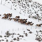 Elk Stampede by Don Despain