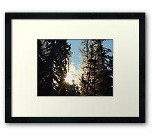 Sun Rising Through The Frosty Trees Framed Print