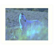 Contented Wild Horse  Art Print