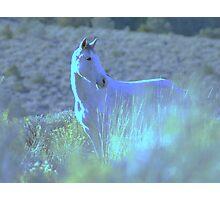 Contented Wild Horse  Photographic Print