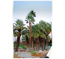 Palm Trees in The Desert Poster