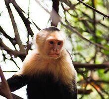 White face monkey by glennwest