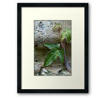 Ivy Framed Print