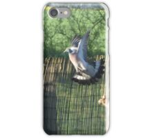 diving pigeon iPhone Case/Skin