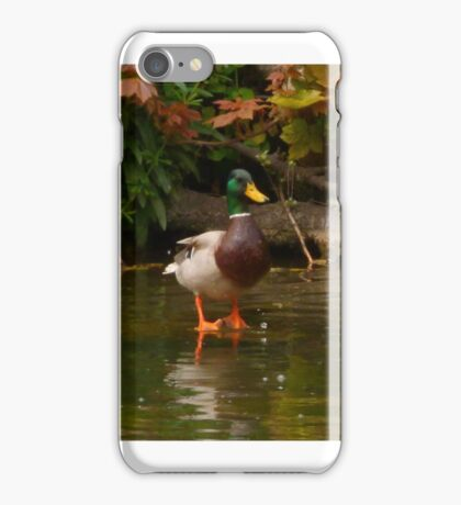 duck on the beck iPhone Case/Skin