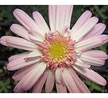 Pink Ribbon Flower Photographic Print
