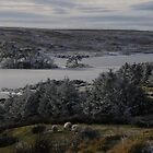 Connemara Winter by Simone Kelly