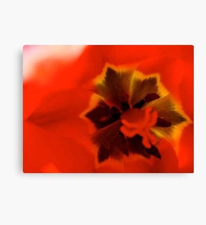 In Flander's Feilds The Poppies Grow Canvas Print