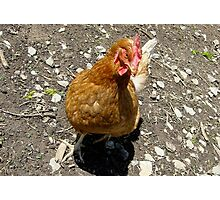 What Came First? The Chicken or The Egg? Photographic Print