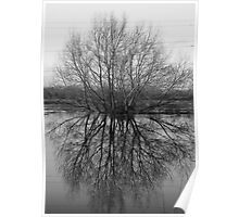 Flood Reflections Poster