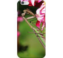 Praying Mantis Eating a Bee iPhone Case/Skin