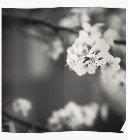 White Floret (B/W) Poster
